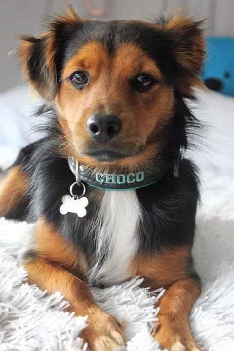 Halsband met naam Choco
