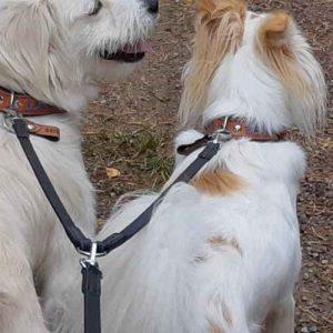 VLD dubbele extensie hondenlijn