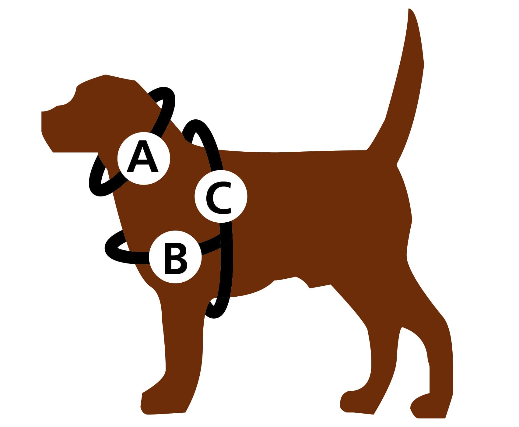 Uw hond op meten