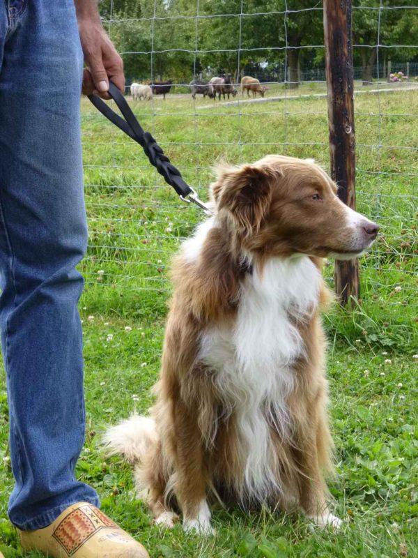 Honden handlijn gevlochten