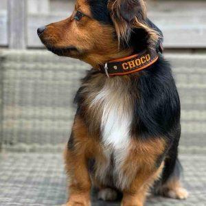 Choco met halsband met naam 20mm