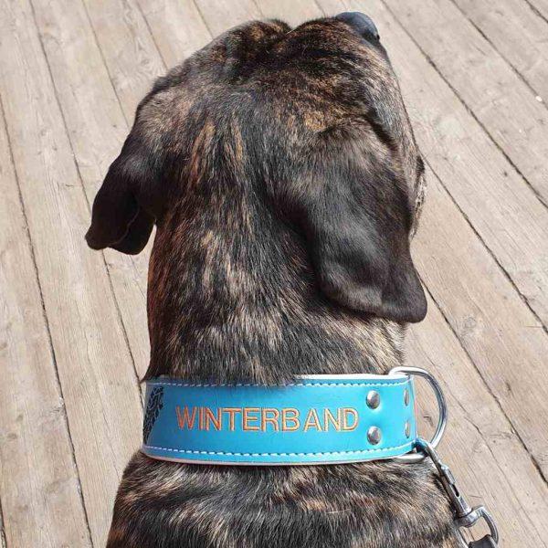 Winterband 50mm breed